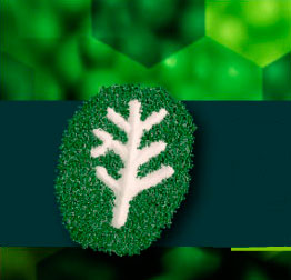 VI International Seminar on Biopolymers and Sustainable Composites: call for speakers