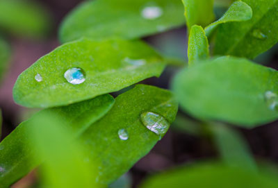 Ultrahydrophobic materials: from the nature to the industry