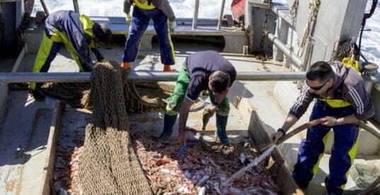 Pescadores recolectando basura en Gandia
